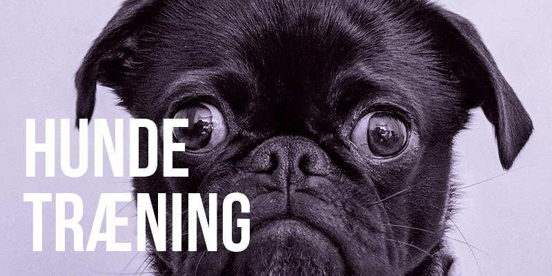 beviser_hundetraening